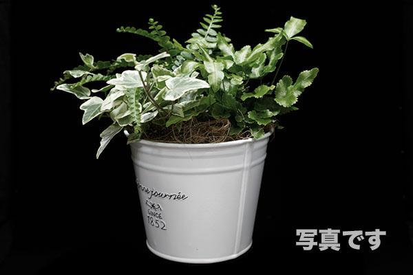 観賞植物の写真