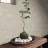 Free-3Dmodel-mossball-plants01
