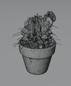 セミの抜け殻3Dモデル
