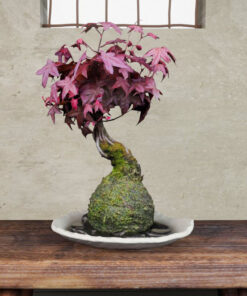 Free-3Dmodel-mossball-japanese-plants-momiji