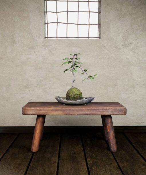 Free-3Dmodel-mossball-japanese-plants