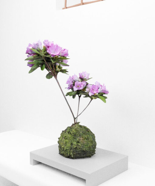 Free-3Dmodel-mossball-japanese-plants-tsutsuji
