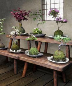 3dモデル-和風植物