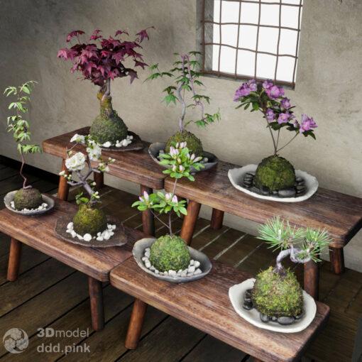 3Dモデル苔玉-盆栽