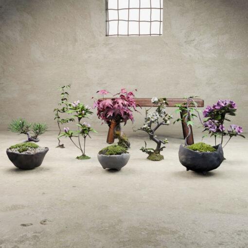 盆栽苔玉鉢セット-3Dモデルです