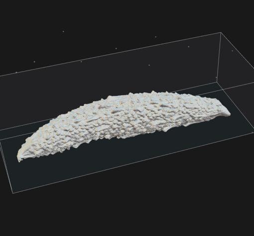 ゴーヤ3Dモデル-フリー