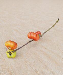 花カボチャ|無料3D素材|フォトグラメトリ|リアル3Dモデル
